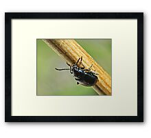 NS Beetle In Balance II ONFX© Framed Print