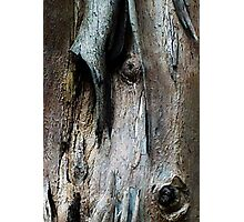 Bark abstract patterns. Photographic Print