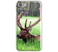 Bull Elk iPhone Case/Skin