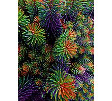 Multi-Coloured Plant Photographic Print