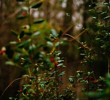 Leaves and Red Berries by Denise Grier