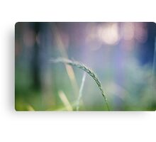 Ear with nature abstract background Canvas Print