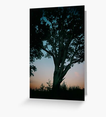 Trees - sunrise (2015) Greeting Card