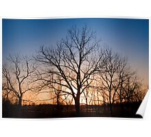 Winter Trees at Dusk Poster