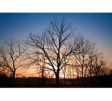 Winter Trees at Dusk Photographic Print