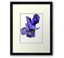 Incredible Iris Framed Print