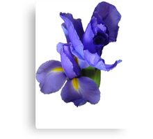 Incredible Iris Canvas Print