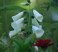 White Foxglove by Clare Colins