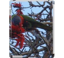 Rosella high in the tree iPad Case/Skin