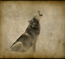 In the Wild, #animal, #wolf, #nature, #redbubble by Lena127