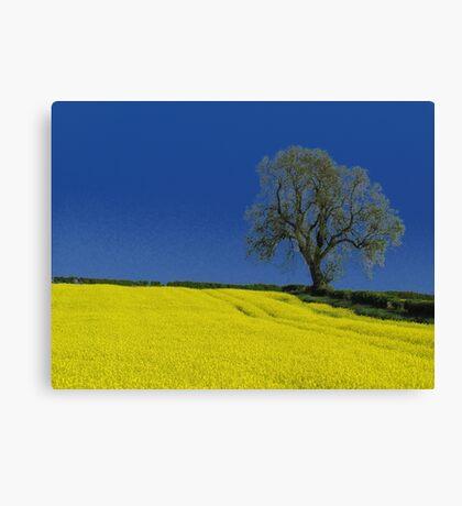 The Oak Tree ( Landscape ) Canvas Print
