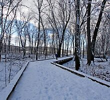 Winter by Dipali S