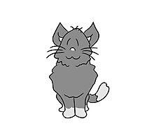 sweet cute kitten fluffy fur Photographic Print