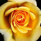 Rich Dreamy Yellow Rose by Joy Watson