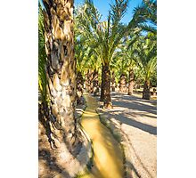 The Palm Grove Photographic Print