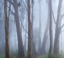 Misty forest by Hans Kawitzki