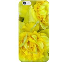 Yellow narcissus Closeup iPhone Case/Skin