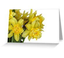 Daffodils macro in white Greeting Card