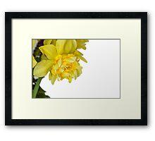 One daffodils macro Framed Print