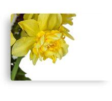 One daffodils macro Canvas Print