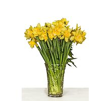 Yellow narcissus in vase Photographic Print