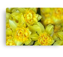 Yellow narcissus macro Canvas Print