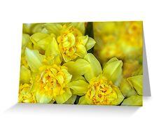 Yellow narcissus macro Greeting Card