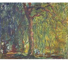 Claude Monet - Weeping Willow , Impressionism) Photographic Print