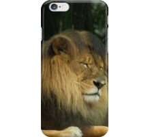 Sleeping Lion iPhone Case/Skin