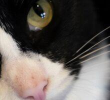 Black white cat  Sticker