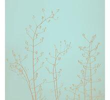 Choco Mint Jasmine Photographic Print