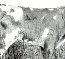Little Calf, Pencil Drawing, Farm Animal Sticker