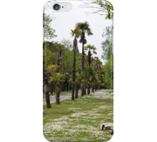 ducks in fota wildlife park iPhone Case/Skin