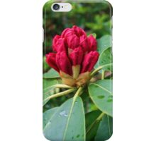 Rhododendron In Bud iPhone Case/Skin