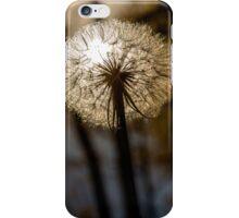 Sunny Salsify iPhone Case/Skin