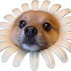 Flower Dog by db608
