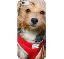 Puppy in the park iPhone Case/Skin