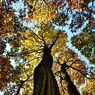 Autumn Colours by Victoria Kidgell