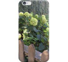 White Hydrangeas in the Hamptons iPhone Case/Skin