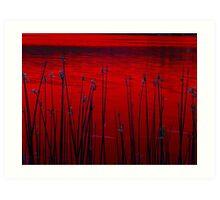 Reeds ! Art Print