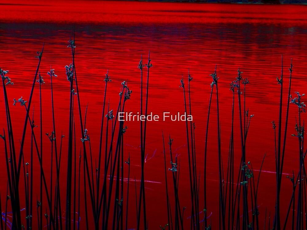 Reeds ! by Elfriede Fulda