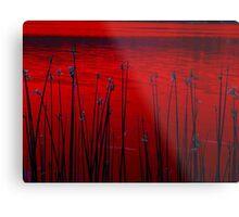 Reeds ! Metal Print