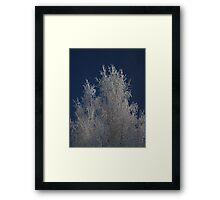 Ice cold Framed Print
