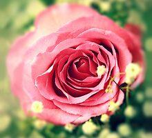 Pink rose by SIR13