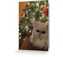 Upset Christmas cat Greeting Card