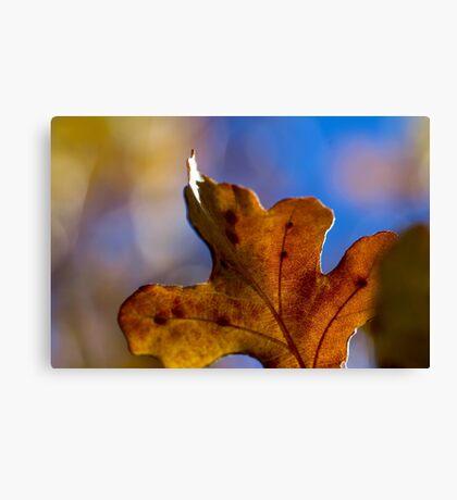 Autumn Oak Leaves 4 Canvas Print