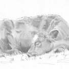Cow Sleeping Curled Up Drawing by MikeJory