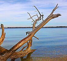Drift Tree by Eileen McVey