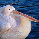 Pelican Pride by howardcar