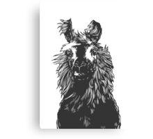 paper llama :: black white wool fiber alpaca tina napoleon funny cute farm farmer animal ink drawing Canvas Print